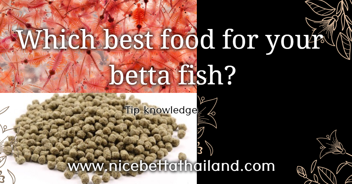 Which the best food for your betta fish