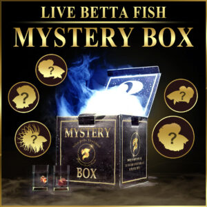 Betta fish Mystery box