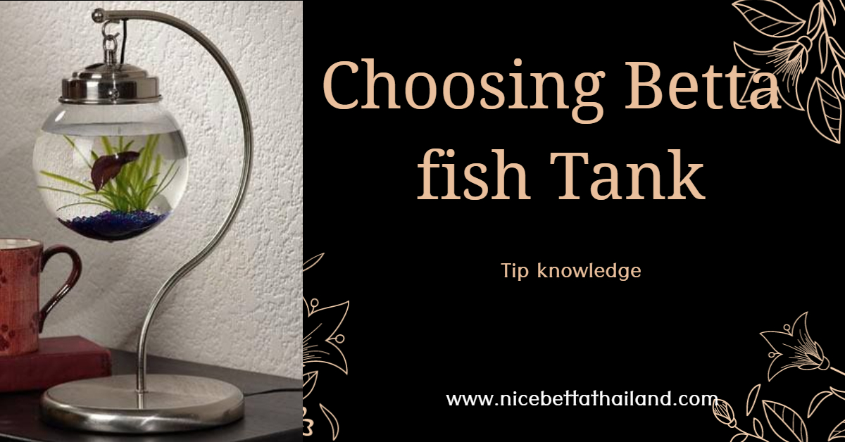 Choosing betta fish tank