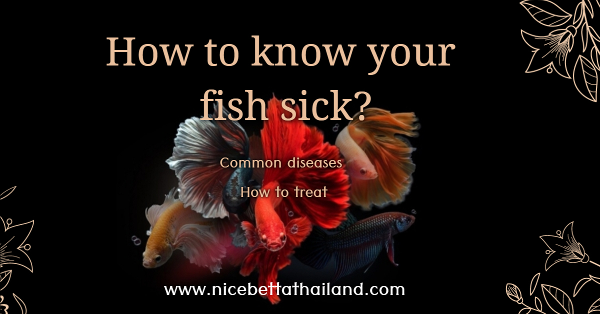 How to know your betta fish sick