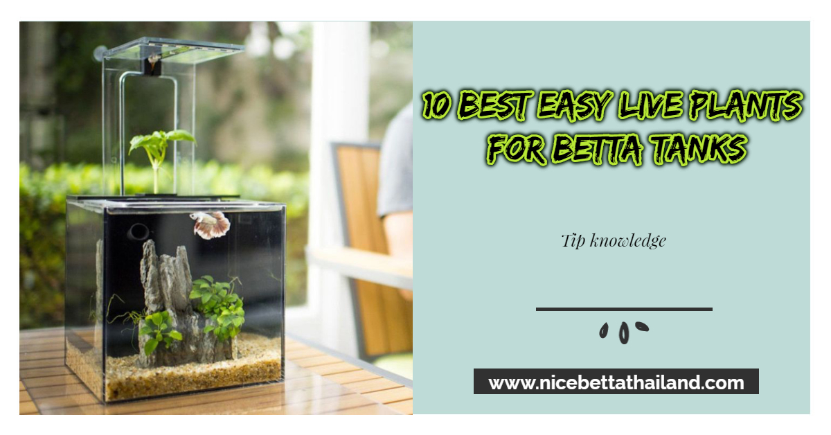 10 BEST EASY LIVE PLANTS FOR BETTA TANKS