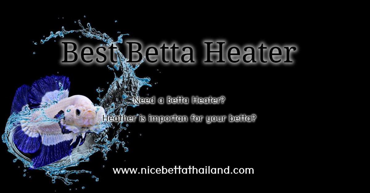 Best Betta fish tank heater