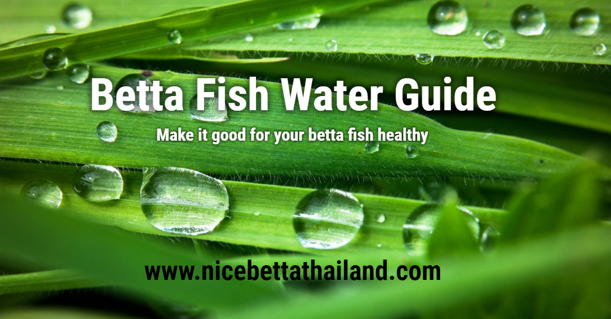Betta Fish Water Guide