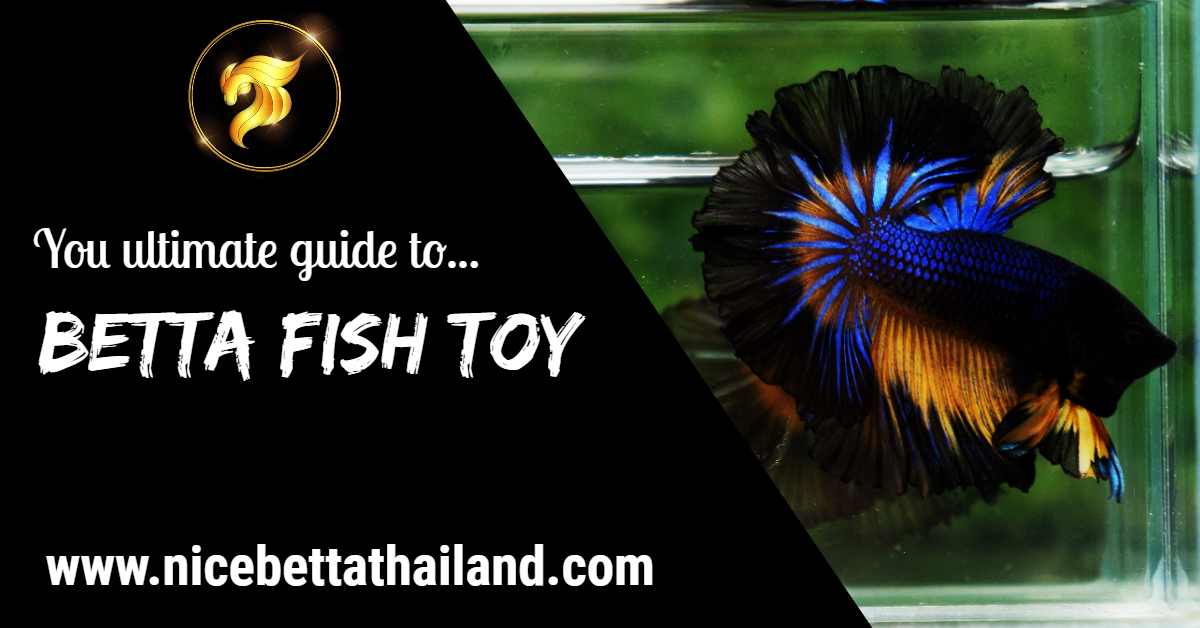 Betta fish toy