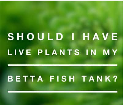 Live plants for betta fish aquarium