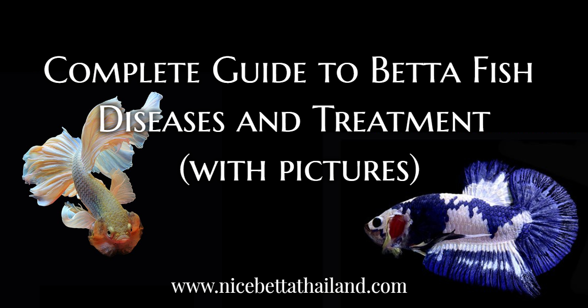 Complete Guide to Betta Fish Diseases and Treatment