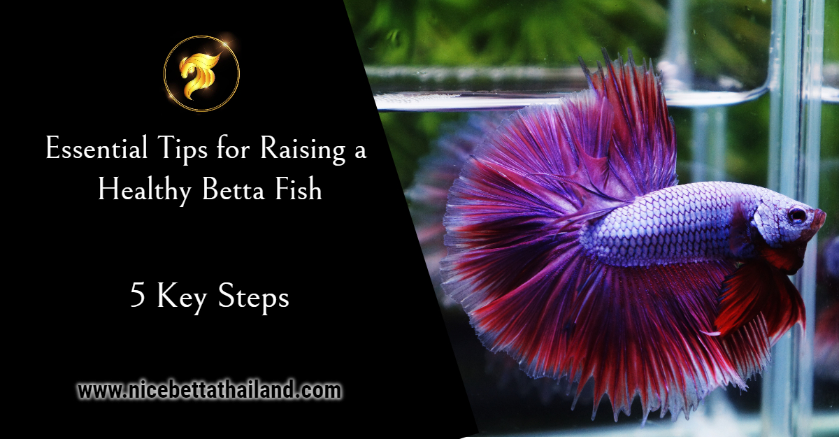 Essential Tips for Raising a Healthy Betta Fish
