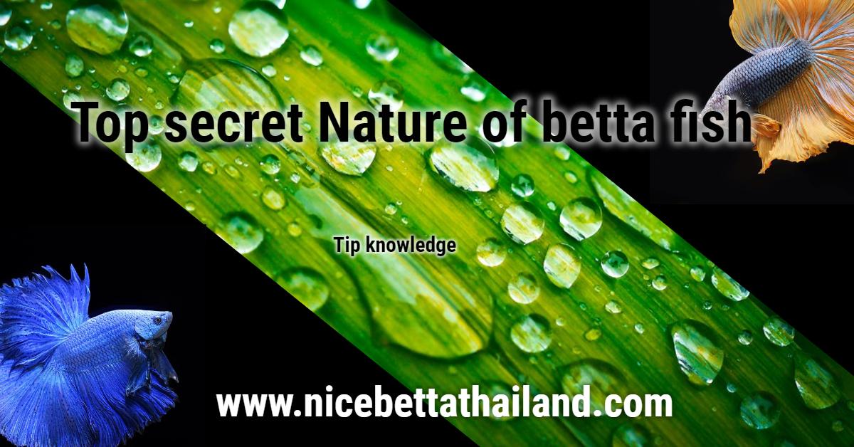 Top secret Nature of betta fish