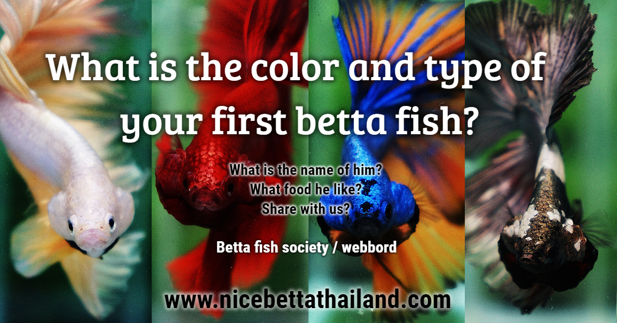 What is the color and type of your first betta fish