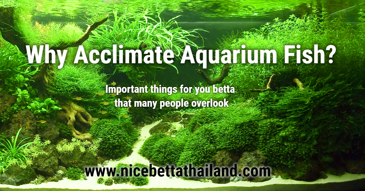 Why Acclimate Aquarium Fish