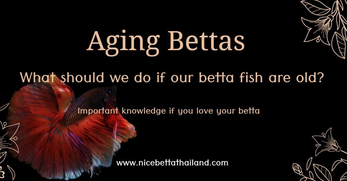 Aging Bettas