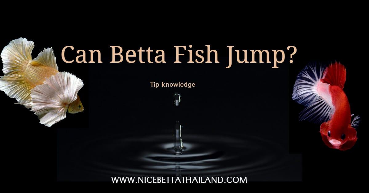 Can Betta Fish Jump