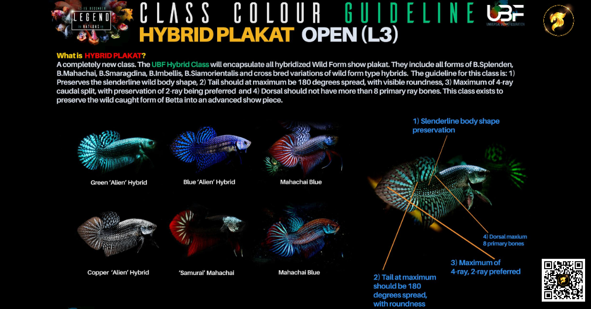 Class color Guideline hybrid Plakat