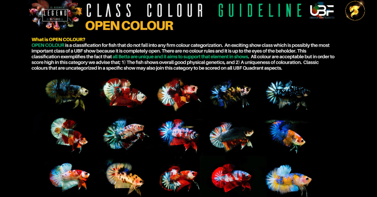 CLASS COLOR GUIDELINE OPEN COLOR COMPETITION