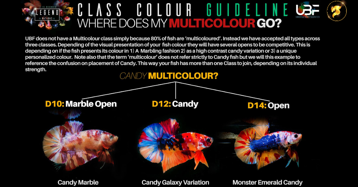 Class color betta fish Guideline Multi color go
