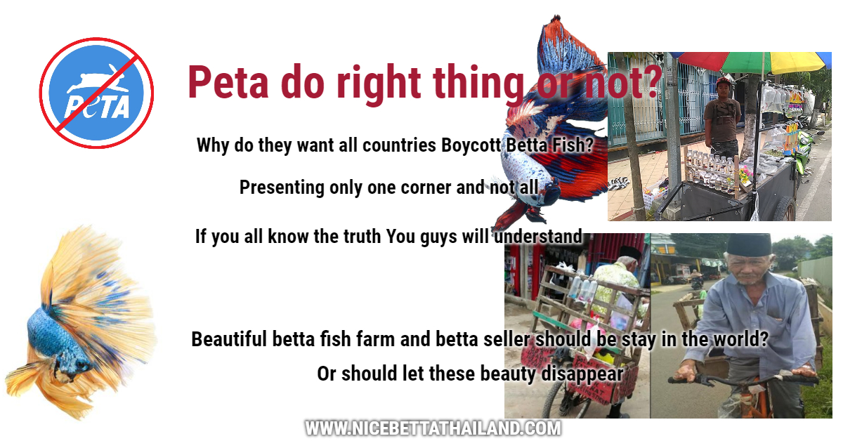 Peta want to all countries boycott betta fish