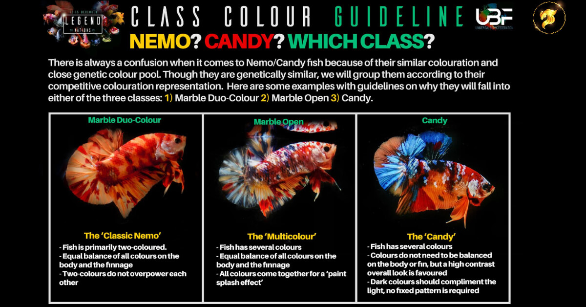 Class color betta fish Guideline NEMO or CANDY
