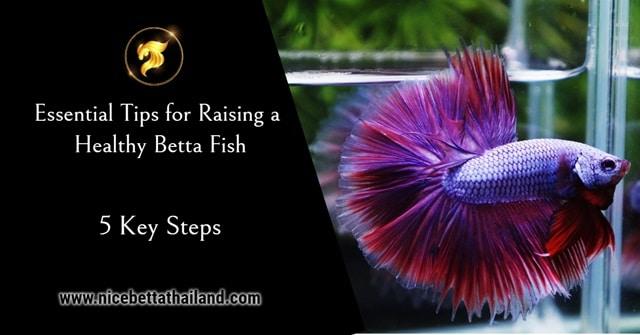 5 Key Steps Tips for Raising a Healthy Betta Fish
