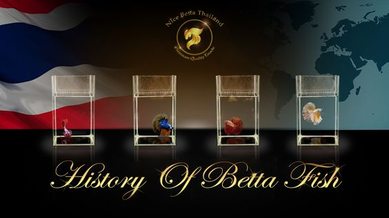 History of betta fish