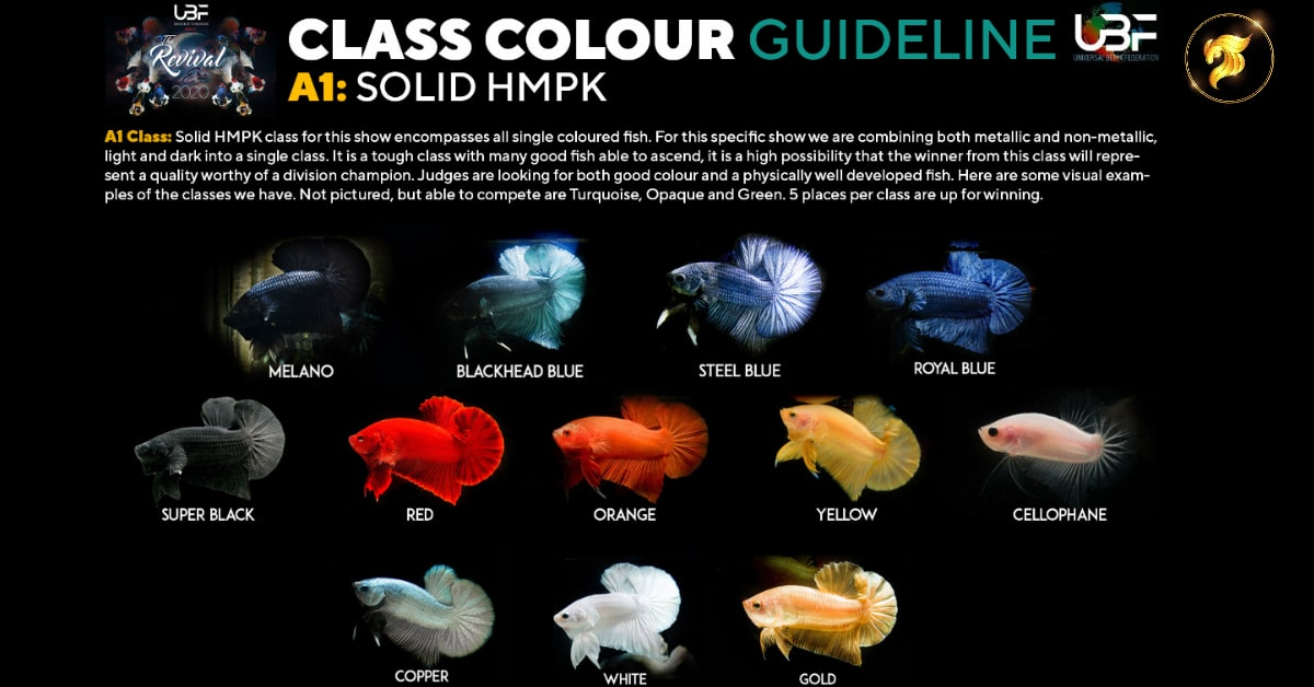 Class betta fish Guideline Solid color