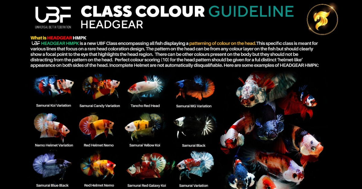 Class color Guideline Headgear