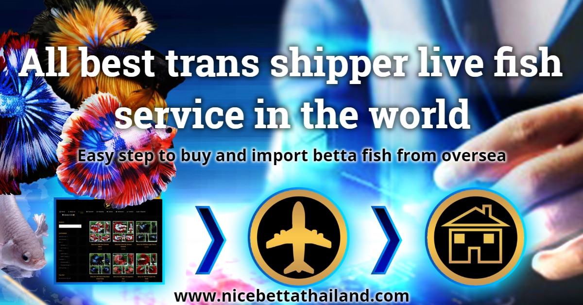 All trans shipping service in the world