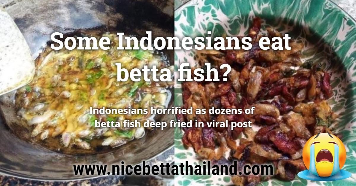 Indonesians eat betta fish