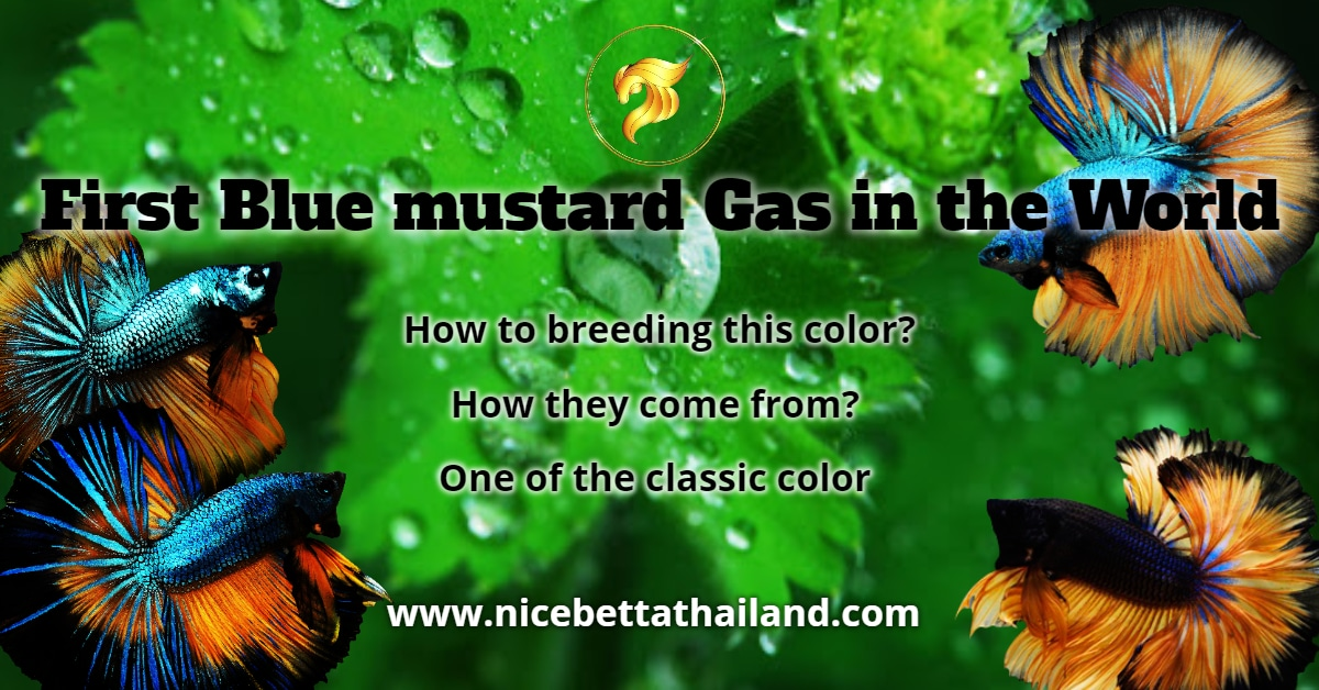 First Blue Mustard Gas in the world
